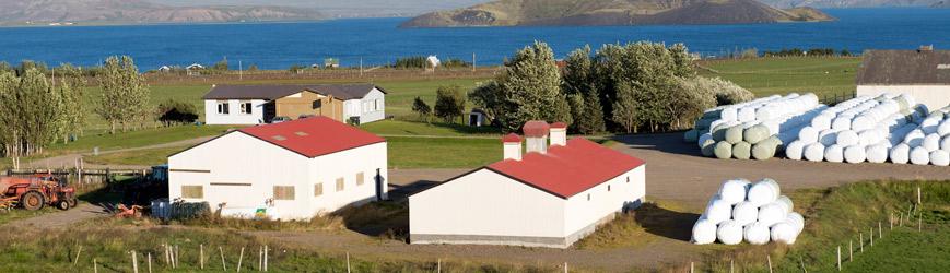 Horft heim að Heiðarbæ I, kjúklingahúsið er til hægri á myndinni.